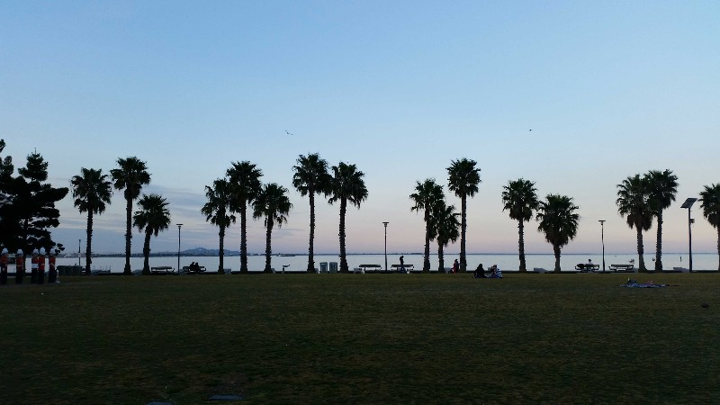 Dusk on the Geelong Foreshore is palm trees with a pink and purple sky
