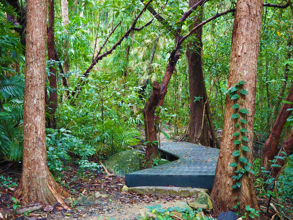 The walking track to the Fitzroy Island summit cross several different types of vegetation including rainforest.