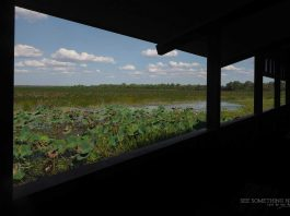 The view from Mamukala Bird Hide in Kakadu National Park
