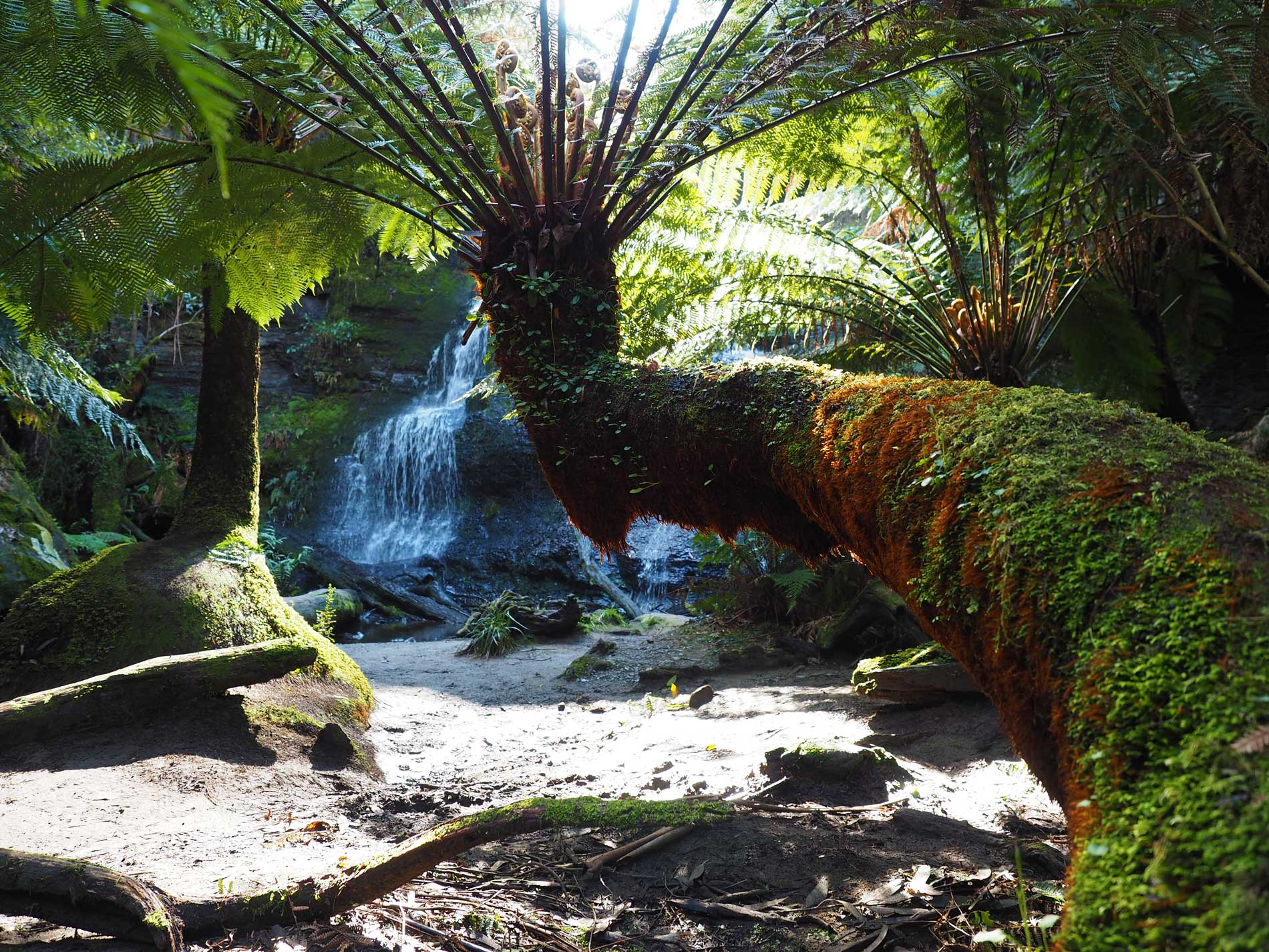 The many waterfalls of the Otway National Park are a beautiful reason to visit the Great Ocean Road in Summer