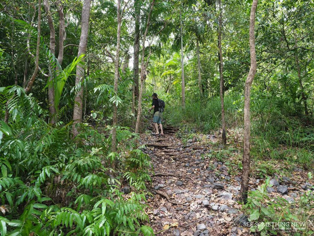 The track through Monsoon Forest on the Upper Cascades walk in Litchfield National Park on See Something New Australian Travel Blog