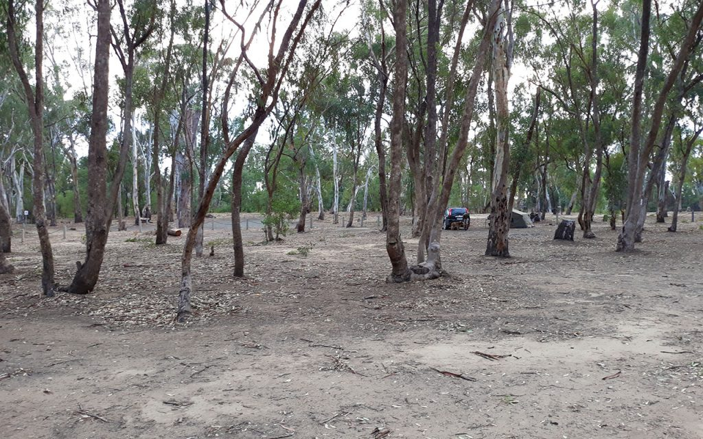 View of bare earth campground amongst the multi stemmed gum trees