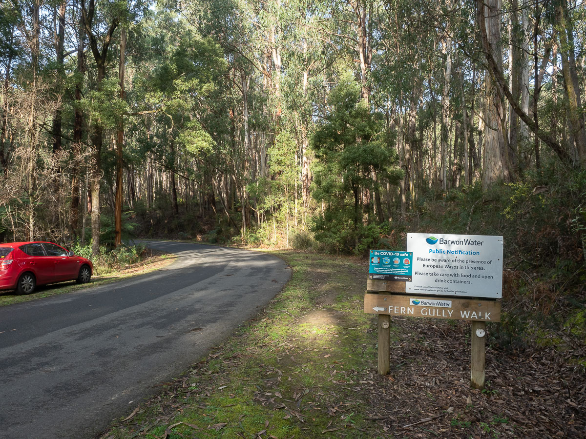 A road winding to the left, surrounded by trees showing a sign pointing to the fern gully walk to the left of the road.