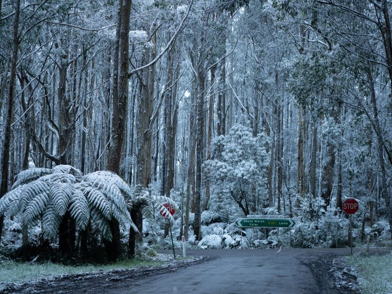 How and where to find Snow in the Otways