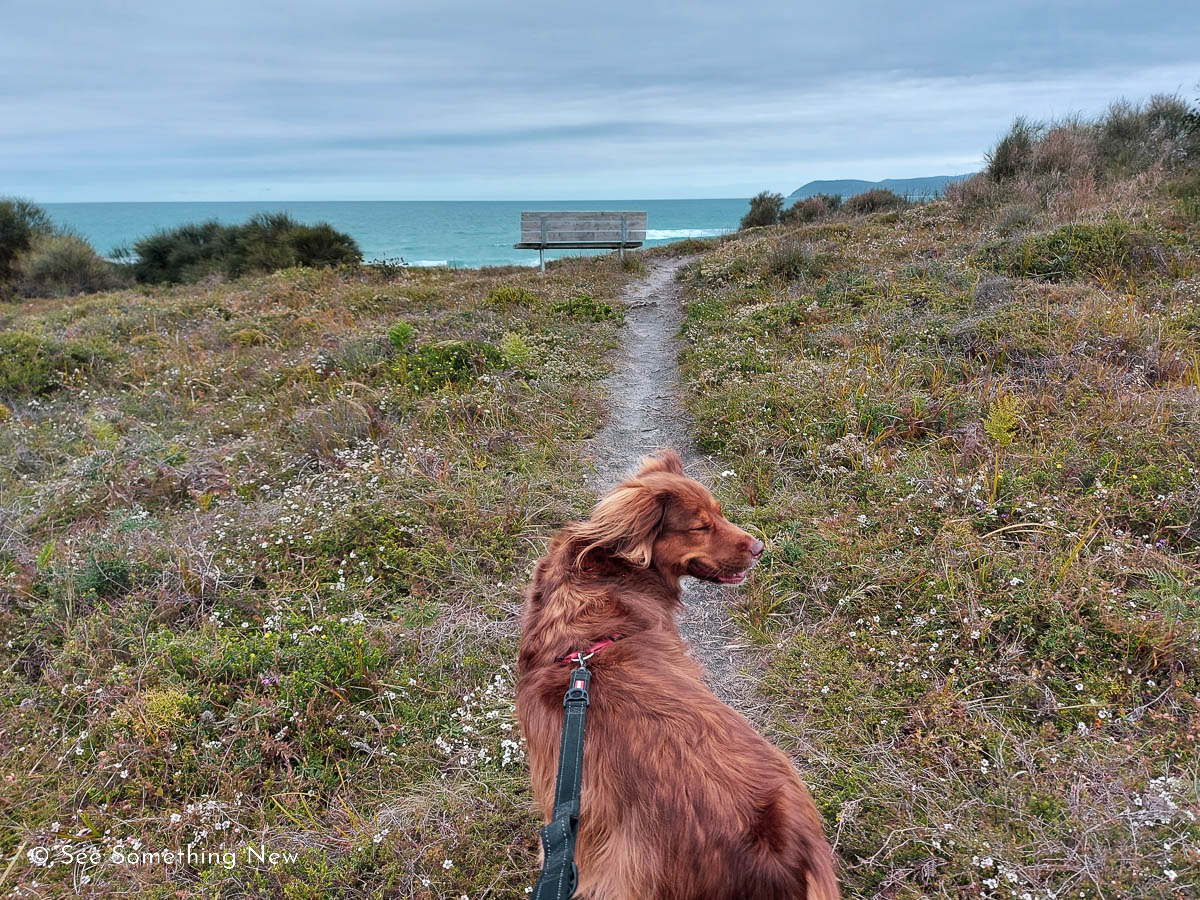 A dog on the side track of the Ocean View Lookout showing that the track is narrow and dogs are allowed