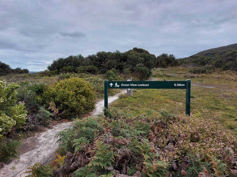 A photo of the track and the sign at the start of the Ocean View Lookout walking showing the distance of .56km one way and has the symbol that the walk is dog friendly.